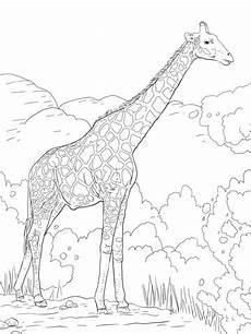 Malvorlagen Age Japanese Ausmalbilder Kostenlos Tiere Giraffe