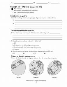 chapter 11 4 meiosis worksheet section 11 4 meiosis pages 275 278 answer key fill online printable fillable blank pdffiller