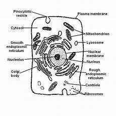 cell diagram worksheet the anatomy and physiology of animals the cell worksheet