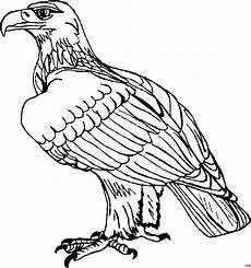 Ausmalbilder Zum Drucken Adler Adler Sitzend Ausmalbild Malvorlage Tiere