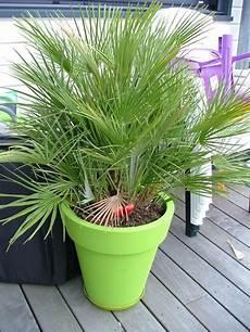 pot pour palmier exterieur am 233 nagement ext 233 rieur palmier maison en bois 224 toit