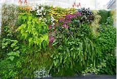 To Plant Vertical Garden best plants for vertical garden vertical garden plants