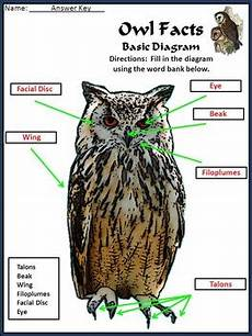 owls activities owl facts science activity bundle 2nd 3rd grade color b w
