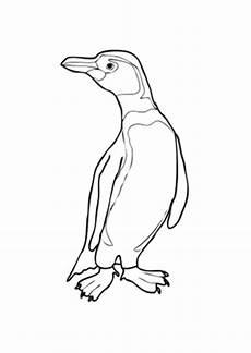 Ausmalbilder Tiere Pinguin Ausmalbilder Humboldt Pinguin Mit Kurzem Schwanz Tiere