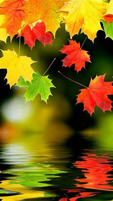 iphone 7 wallpaper fall 28 breath taking and most beautiful fall wallpaper for