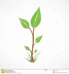 green seedling with roots stock illustration illustration