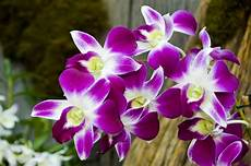 Flowers 5 Orchid Flower Bunga Anggrek Steemit