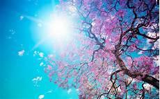 Nature Cherry Blossom Laptop Wallpaper