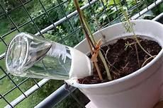 zimmerpflanzen im urlaub bewässern blumen gie 223 en im urlaub so einfach ist es wirklich