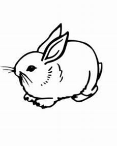kaninchen malvorlagen gratis zum ausdrucken