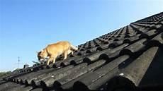 auf dem dach katzen auf dem dach