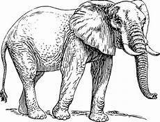 sketch of elephant coloring pages coloring sky
