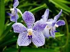 orchideen tipps zu standort pflege vermehrung plantura