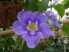 piante fiorite da terrazzo piante fiorite da balcone piante da terrazzo