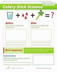 science worksheets experiments 12186 celery experiment worksheet education