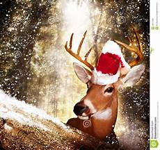 christmas deer image of deer creature animal 16217198