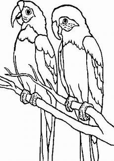 malvorlagen papagei zum ausdrucken ausdrucken
