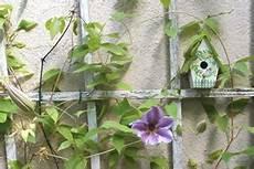 Rankhilfen Für Kletterpflanzen - rankhilfen kletterhilfen und spaliere f 252 r kletterpflanzen