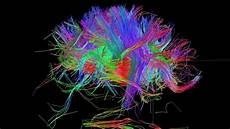 brain wiring diagram can we build a complete wiring diagram of the human brain