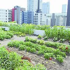 jardin potager sur terrasse syst 232 me de v 233 g 233 talisation potag 232 re sur toiture terrasse