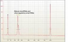 illumina sequencing cost small rna illumina sequencing infravec2 h2020 no cost