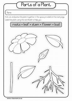 discovering plants worksheets grade 5 13532 of part seed plant diagram caps grade1 lifeskills term3 plants seeds parts of a plant parts