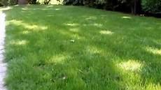 Rasen Gelb Nach Winter - rasen vertikutieren unterschiede ergebnisse bei