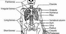 Cado Balog Anatomi Dan Fisiologi Sistem Muskuloskeletal