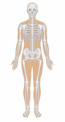 Anatomi Tubuh Manusia Animasi Kesehatan Anda