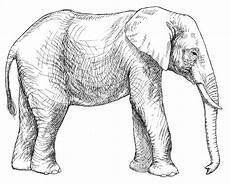 draw so animals coloring pages 17359 animal coloring pages for adults fruit bat elephant coloring page elephant outline