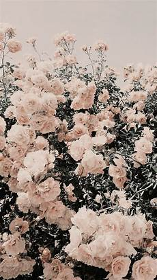 Iphone Pastel Aesthetic Floral Wallpaper
