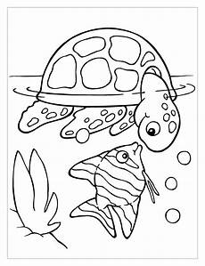 Turtle Coloring Sheet Turtles To Color For Turtles Coloring Pages