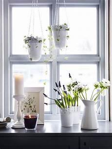 große fenster kaufen pflanzenbeh 228 lter f 252 r jeden stil fensterbank dekorieren