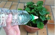 comment arroser ses plantes pendant les vacances comment s occuper de ses plantes durant les vacances