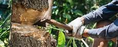 Comment R 233 Aliser L Abattage D Un Arbre Dans Jardin