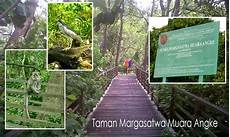 Suaka Margasatwa Muara Angke Hutan Mangrove Di Utara