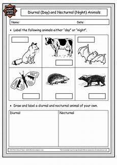 image result for nocturnal animals worksheets kindergarten nature friends class