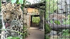 Gutschein Zoo Leipzig - im tal der leoparden zoo leipzig