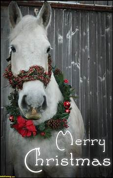 merry christmas images with animals dontly me