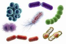 microbiota relevance ecologic