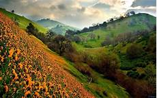 Flower Valley Wallpaper by Hd Wallpapers Beautiful Hd Valley Wallpapers
