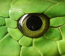 Ninjago Malvorlagen Augen Tier Die Besten 25 Schlangen Bilder Ideen Auf