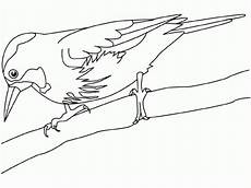 dibujo de un turpial dibujo para colorear pajarillo 07