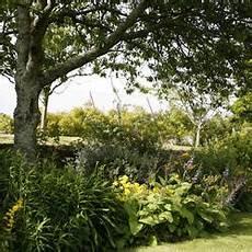 Kirschlorbeer Pflege Und Sortentipps Mein Sch 246 Ner Garten