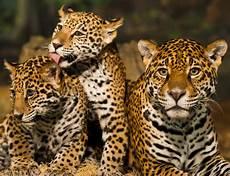 list costa rica s jaguar rescue center