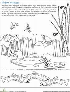 nature and animals worksheets 15101 color the freshwater habitat with images habitat activities wetlands activities habitats