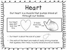human body heart brain lungs stomach muscles experiments 2nd grade