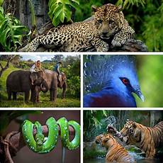 Bali Luxury Villa Animal Escapes Zoo | bali s wild side ultimate bali