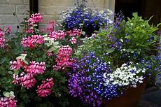 thrill fill and spill and other container gardening
