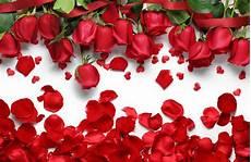 Petals Photo petals hd wallpapers